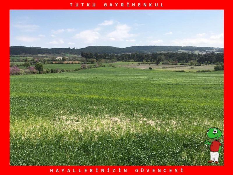 SAVAŞTEPE'DE OTOYOLA YAKIN 25.785 M2 TARLA – TUTKU GAYRİMENKUL