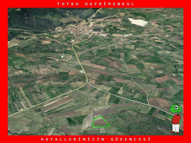 KORUCU'DA YATIRIMLIK 12.986 M2 TARLA – TUTKU GAYRİMENKUL